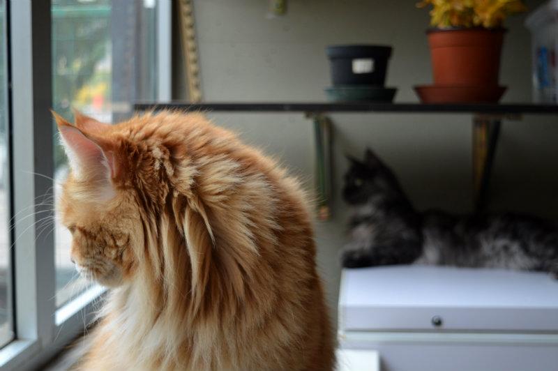 cats near window