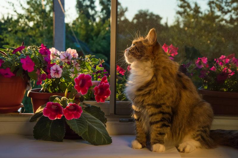 cats near flowers