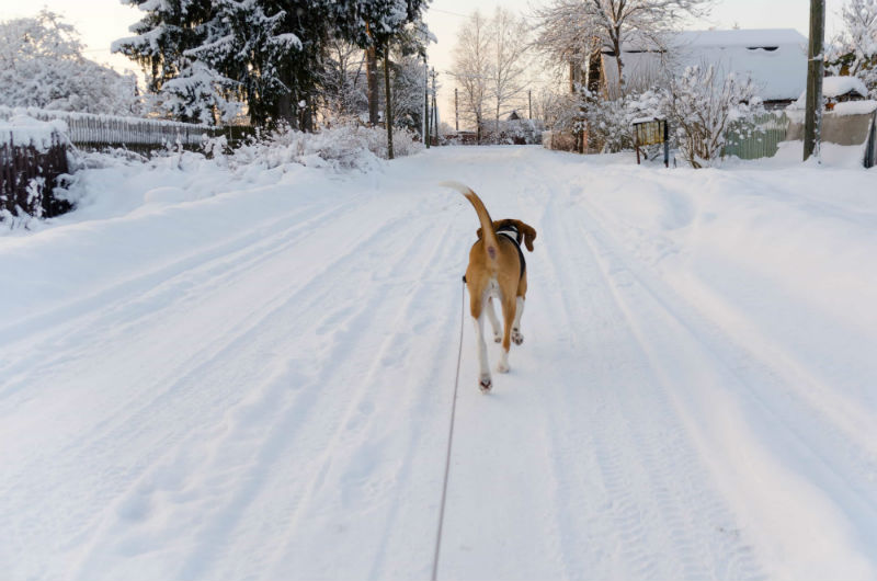 Keeping Your Pet Warm during Cold Season