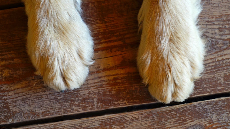 How to Trim Dog's Nails