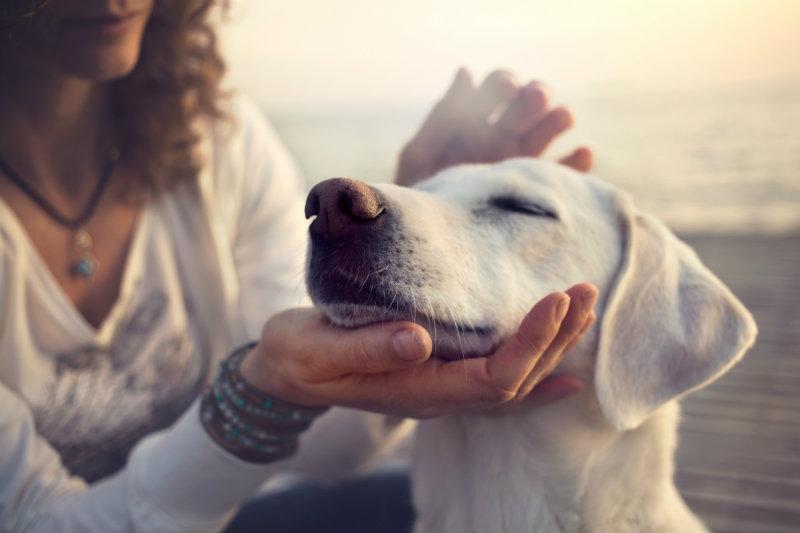 senior-pet-wellness