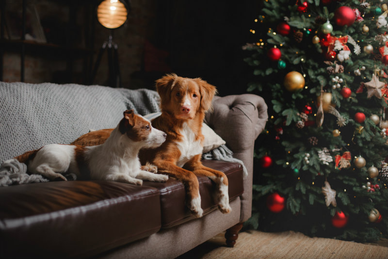 dogs sitting near a christmas tree