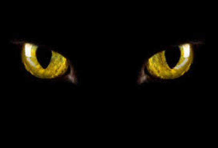 blog-cat-black