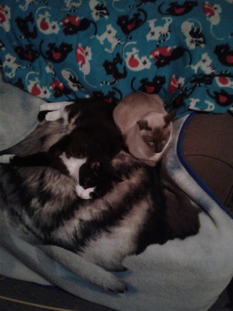 senior-cat-blog