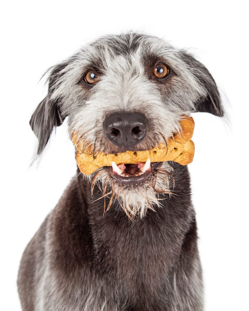 dog holding dog bone treat