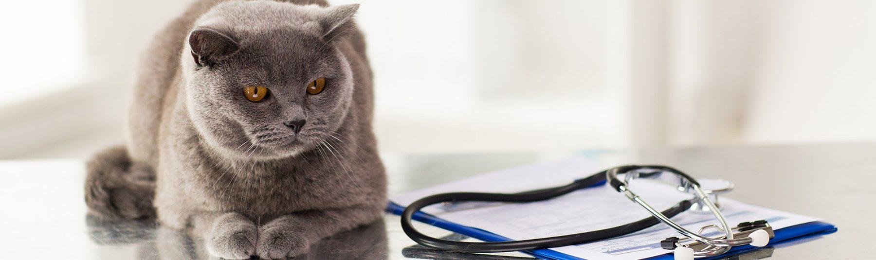 cat-overweight-help