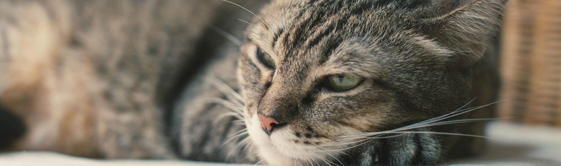 cat-deworming