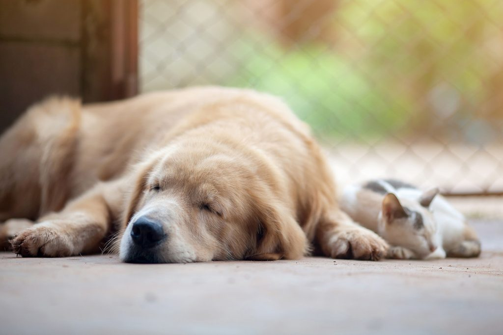 dog-cat-sleeping