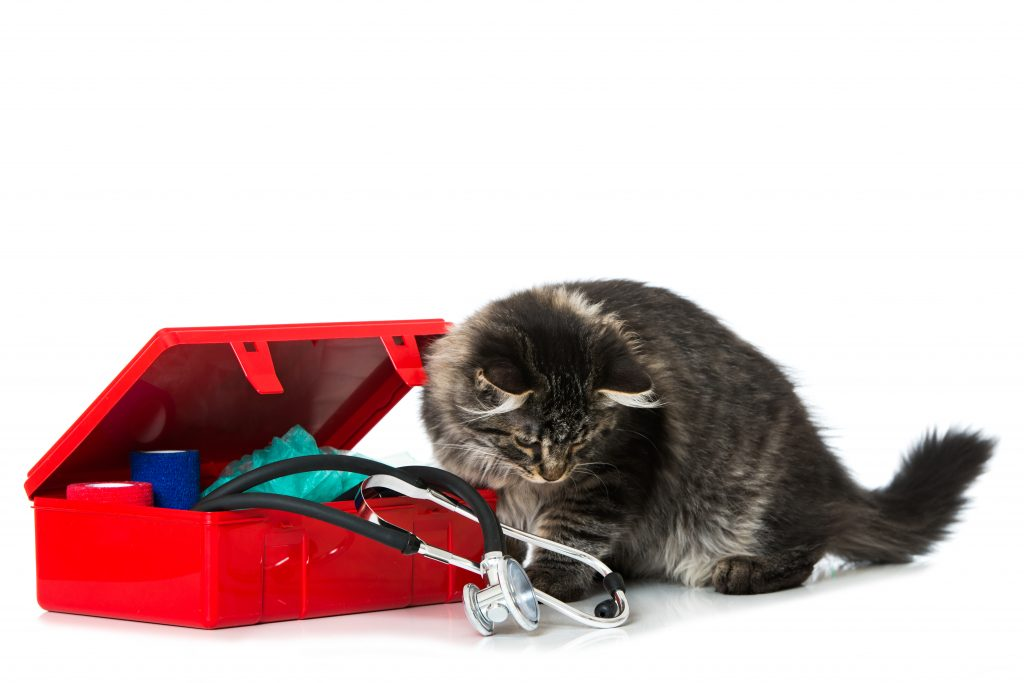 cat looking at first aid kit