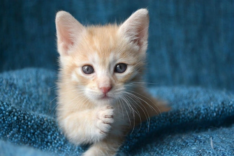 Tips For Caring For Kittens