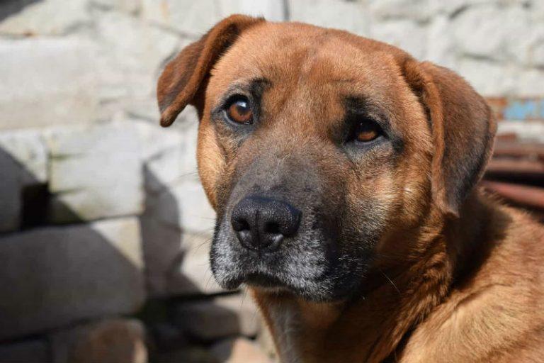 Pneumonia In Our Pets Dartmouth Veterinary Hospital