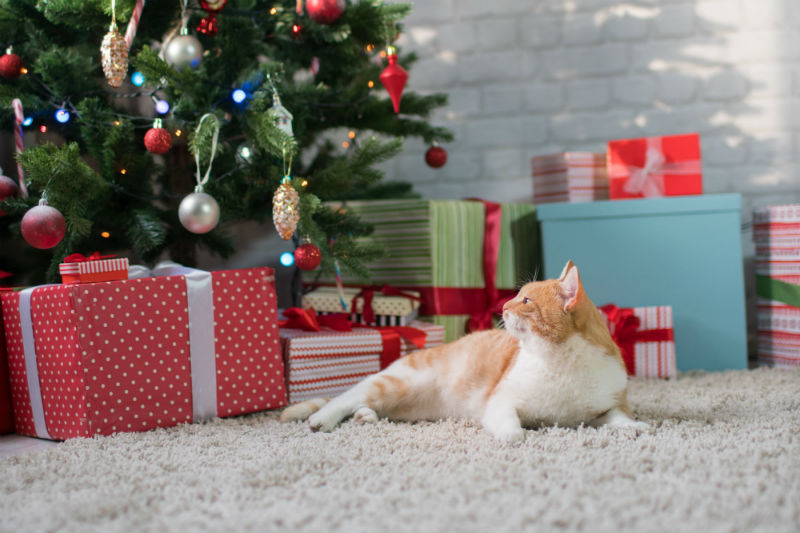 Top 5 Holiday Gifts for Pets