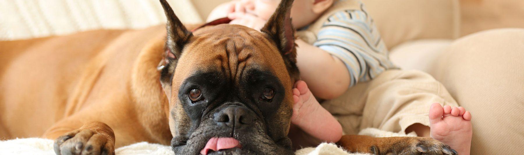 dog_behavioural