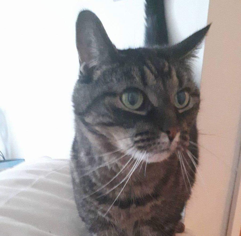 a cat standing on a sofa armrest