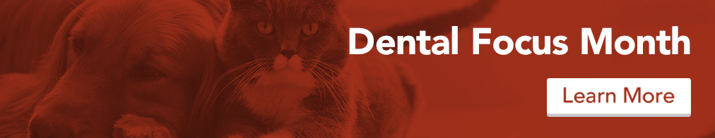 homepage_dental_red