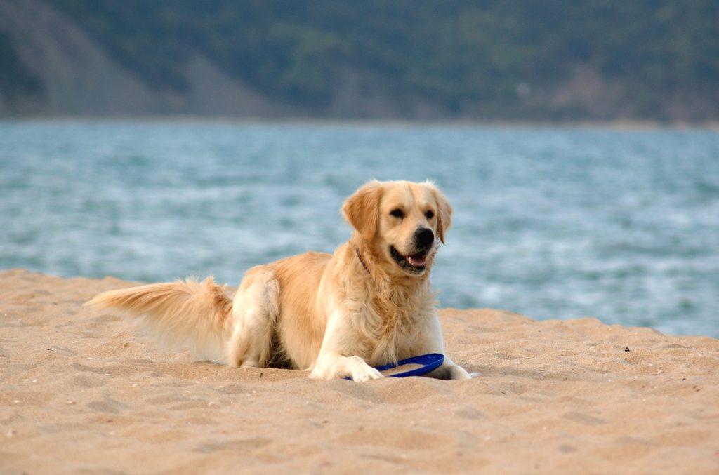 beach-skin-care