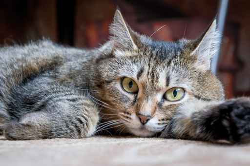 blog-cats