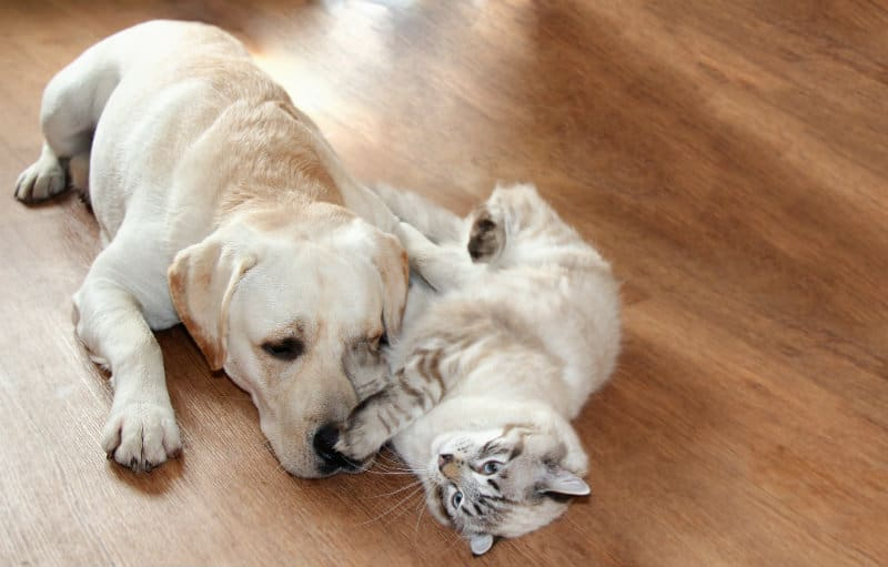 cat and dog cuddling each other