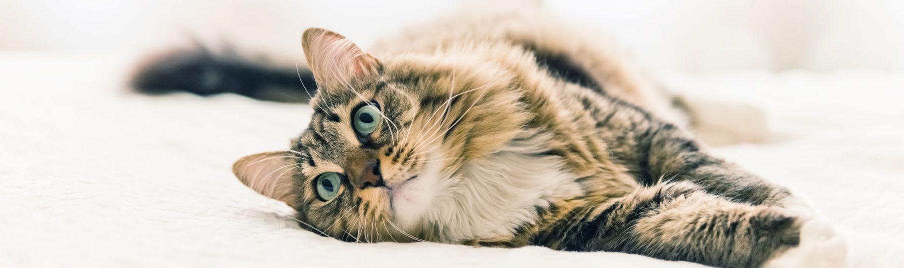 De Worming A House Cat