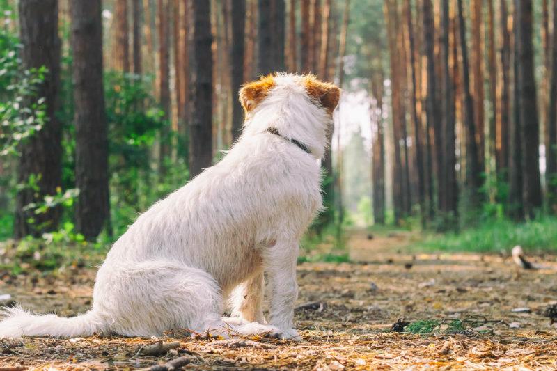 dog-ticks-outside