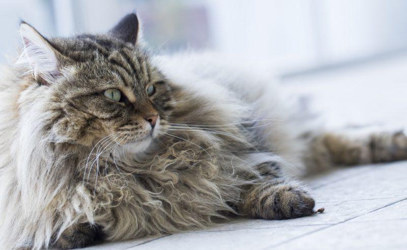 Pet Calmer For Cats