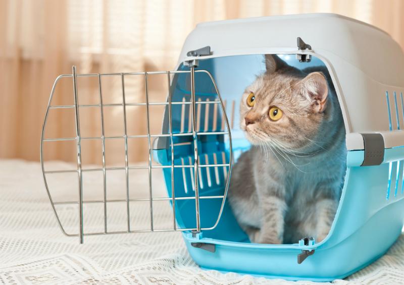 Cat inside a cat carrier